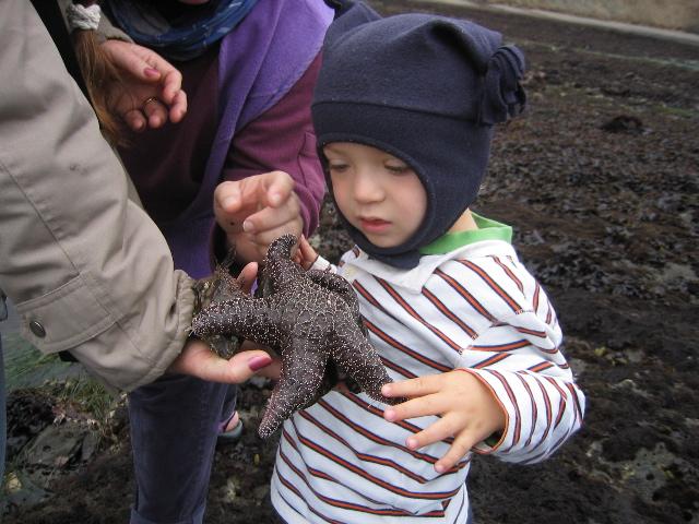 http://www.eichemiller.com/images/ei-starfish-25Jul05.jpg