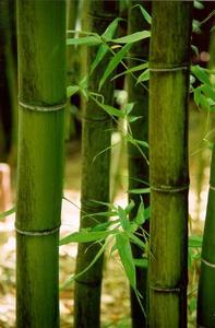 http://www.eichemiller.com/images/hakone-bamboo.jpg